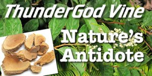 ThunderGod Vine / Tripterygium Wilfordii -aka- lei gong teng in Asian countries has recently received world wide attention for treating many serious ailments. http://thundergodvines.org/